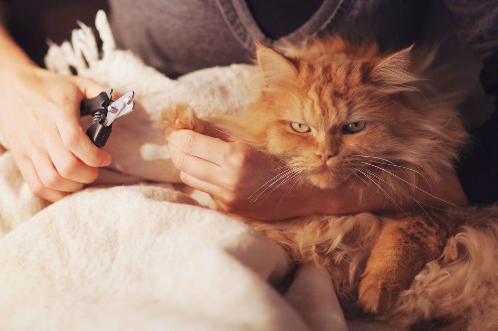 Trucos para convivir con gatos